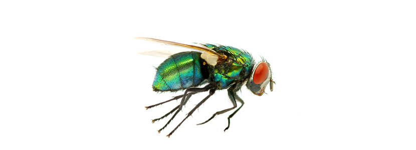 mosca-aire